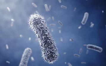 肠道菌群-宿主代谢物检测